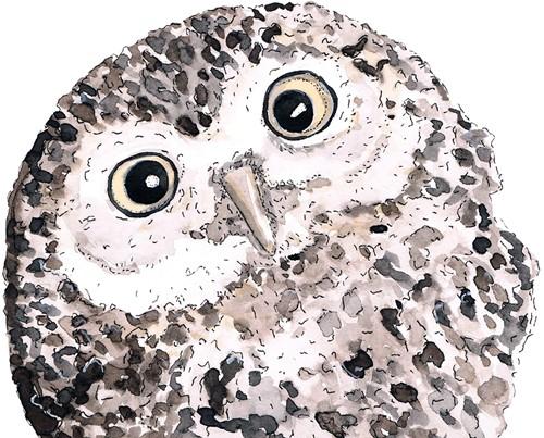 PPD Owl Napkin 33x33